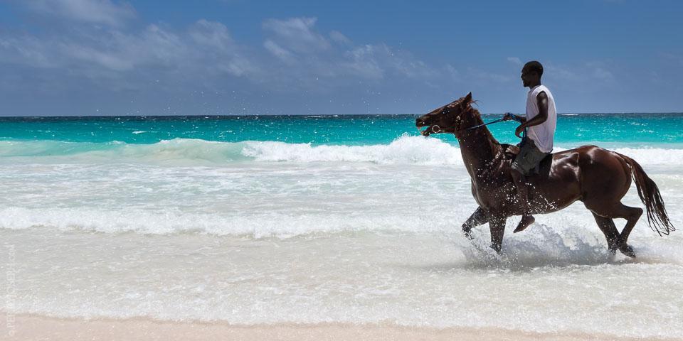 horses_harbour_island_20150512_1721.jpg