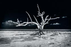 lone_tree_20140509_3948.jpg