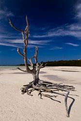 lone_tree_IMG_8415.jpg