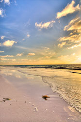 Morning Glory on Harbour Island Bahamas